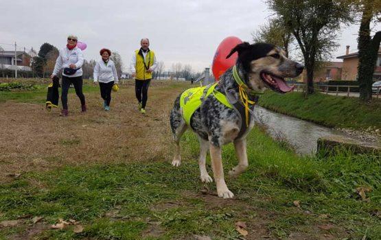 39^ corsa lungo il fiume zero camminata per tutti